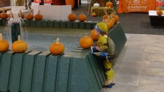 Pumpkins to decorate