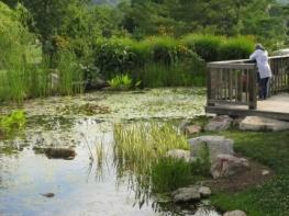 Jane Andrews Memorial Stream Garden