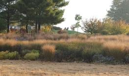 Hahn Meadow Garden